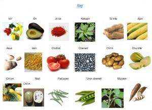 Algunos vocablos en lengua tseltal